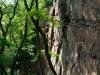 Klettern im Kronthal