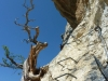 Baum im Klettersteig